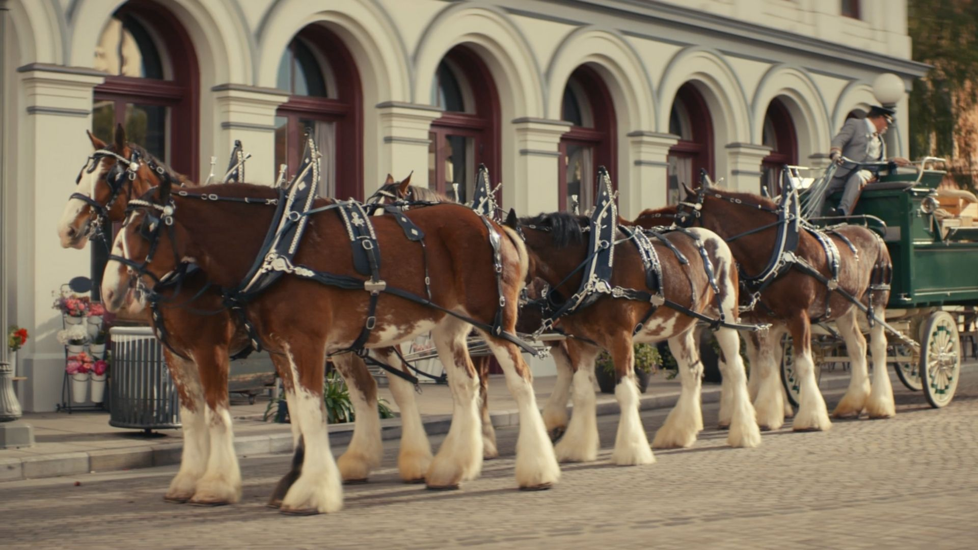 Your Cousin From Boston Frees Clydesdales