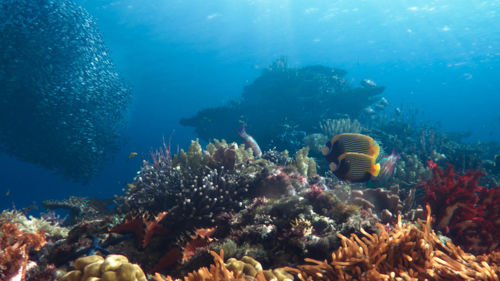 SHEBA® Hope Reef